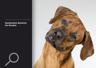 Vestibuläres Syndrom bei Hunden