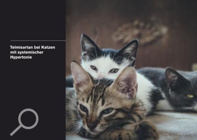 Telmisartan bei Katzen mit systemischer Hypertonie