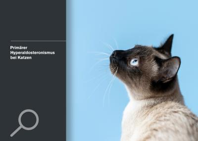 Primärer Hyperaldosteronismus bei Katzen