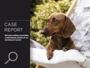 CASO CLÍNICO: Necrosis cutánea secundaria a quemaduras solares en un dachshund marrón