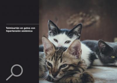 Telmisartán en gatos con hipertensión sistémica