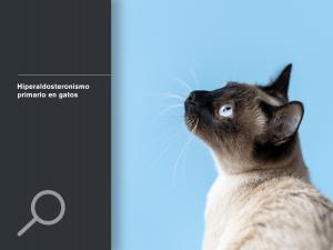 Hiperaldosteronismo primario en gatos