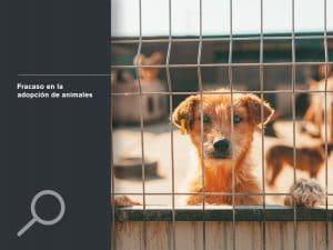 Fracaso en la adopción de animales