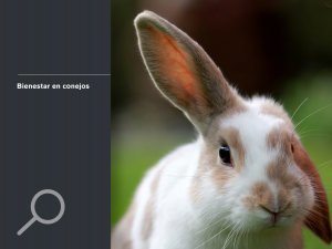 Bienestar en conejos