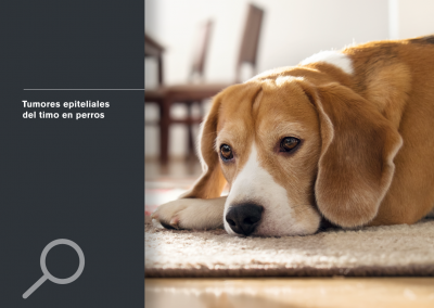 Tumores epiteliales del timo en perros