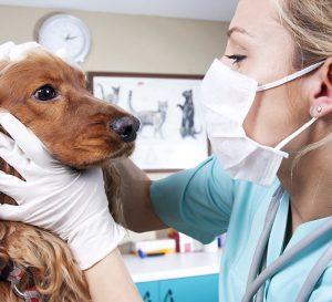nurse examining dog