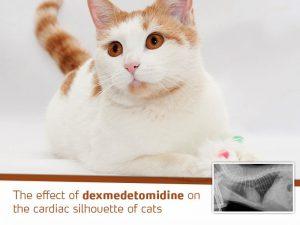 effect-dexmedetomidine-cardiac-silhouette-of-cats