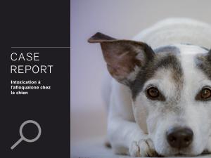 CASE REPORT: Intoxication à l'afloqualone chez le chien