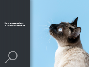 Hyperaldostéronisme primaire chez les chats