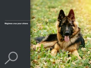 Régimes crus pour chiens