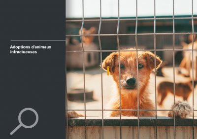 Adoptions d'animaux infructueuses
