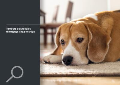 Tumeurs épithéliales thymiques chez le chien